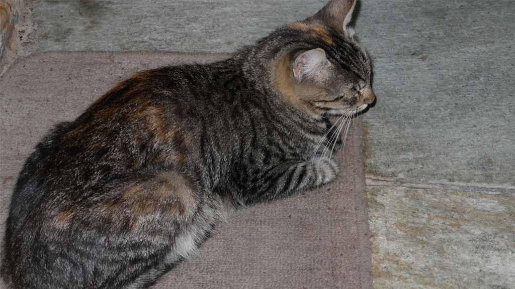 49da152770dc Ιστορίες Αγάπης με ζώα - Κάθε γάτα έχει τη δική της ιστορία - viewtag.gr