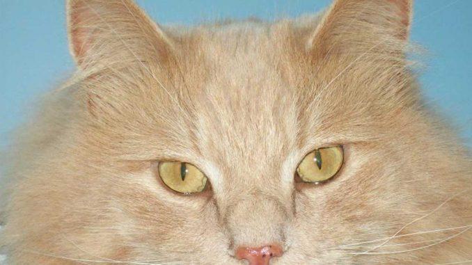 Η γάτα η Ξανθούλα