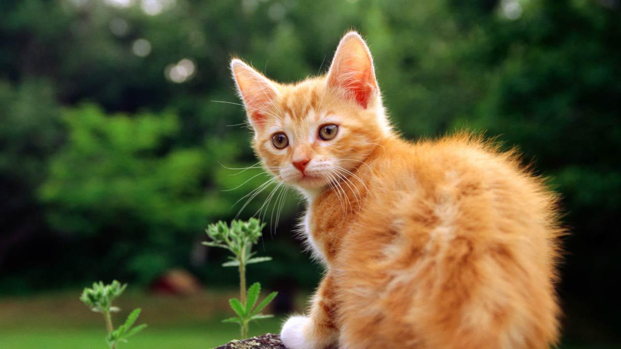 Οι γάτες του κήπου