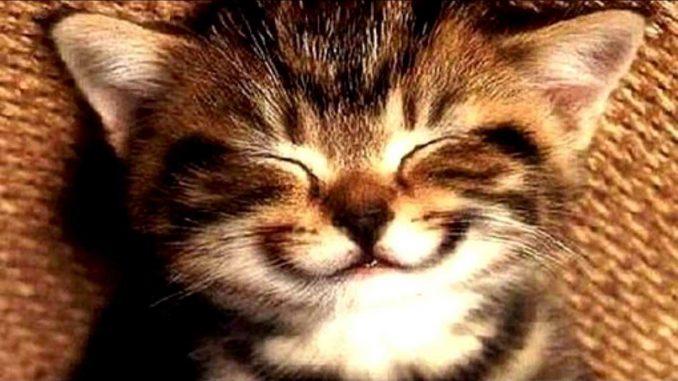 Κλεμμένα χαμόγελα