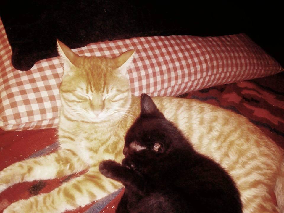 Ο Στράτος Διονυσίου, ο Μαύρος ο Θεός κι εγώ, ο άνθρωπος των Γάτων μου